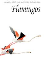 Flamingos cover