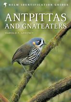 Antpittas and Gnateaters cover