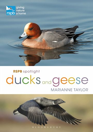 RSPB Spotlight Ducks and Geese cover