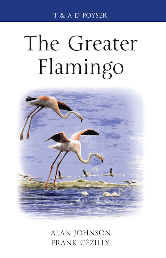 The Greater Flamingo cover