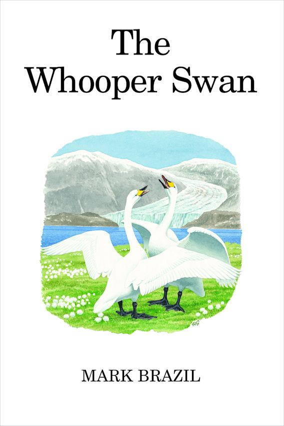 The Whooper Swan cover