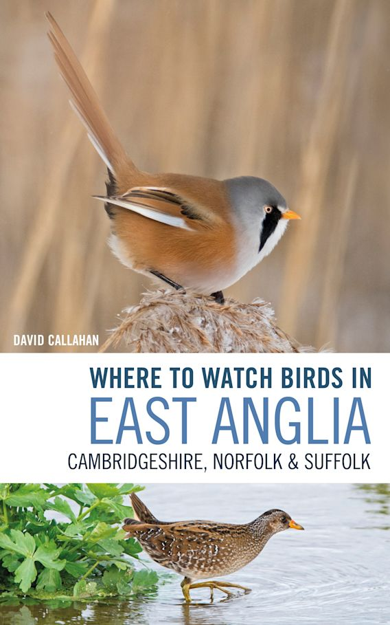 Where to Watch Birds in East Anglia cover