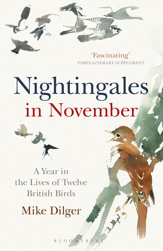 Nightingales in November cover