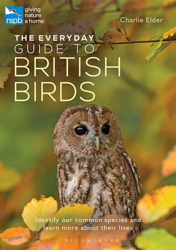 The Everyday Guide to British Birds cover