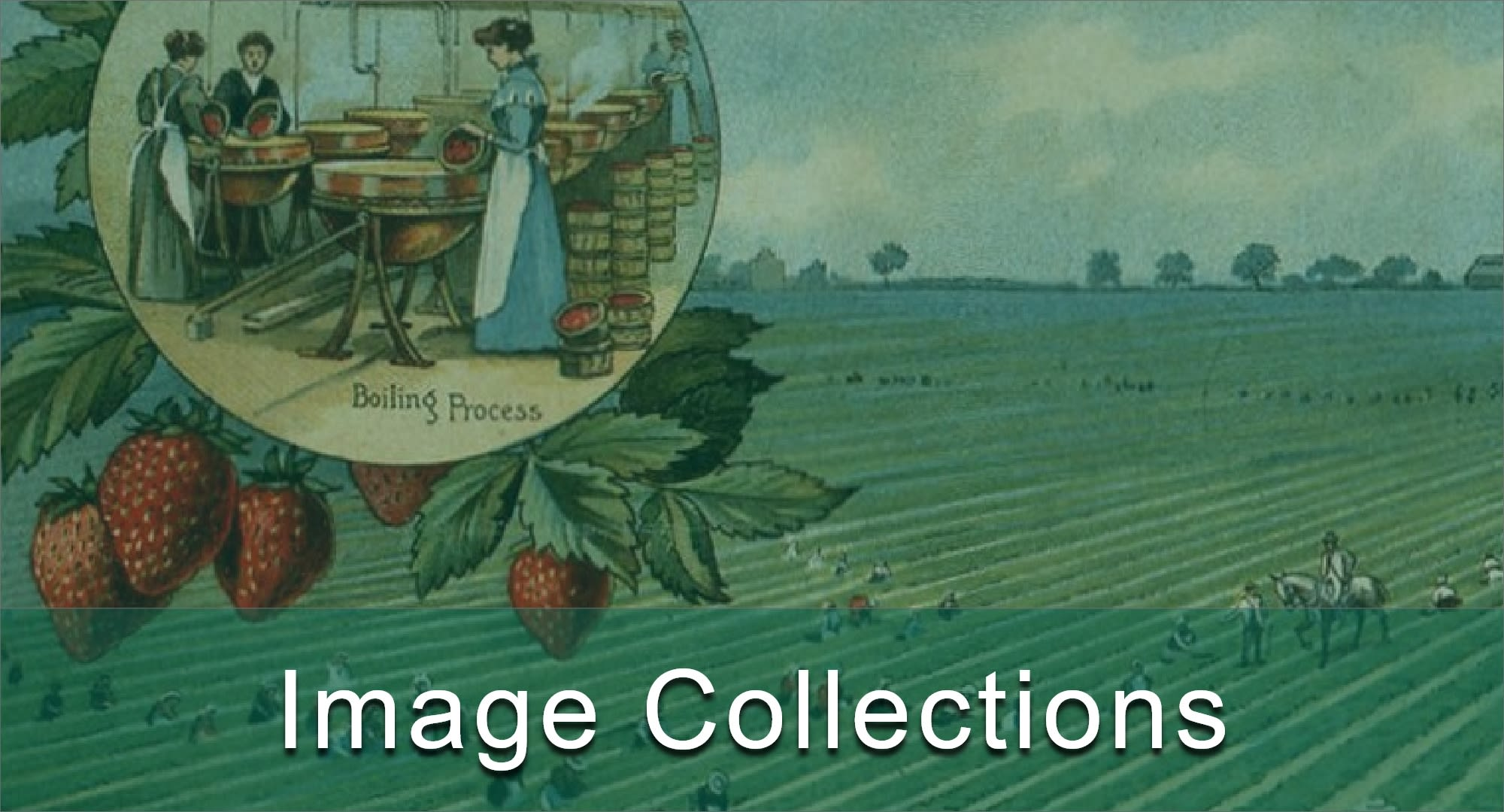 Click here to view the museum collections