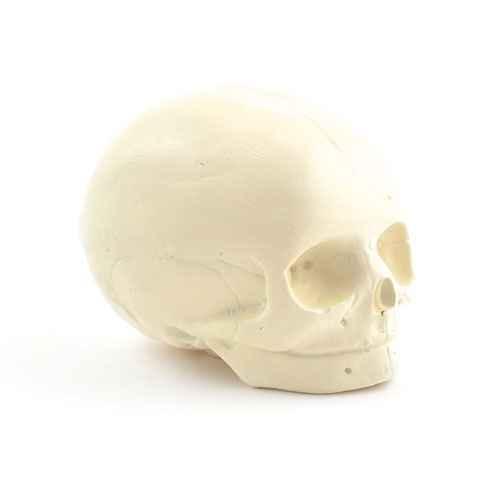 Foetal Skull Model