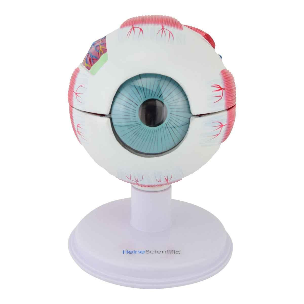 6-part Eye Model