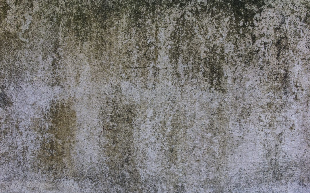 Mold Assessment & Removal: I have mold in my house, what do I do?