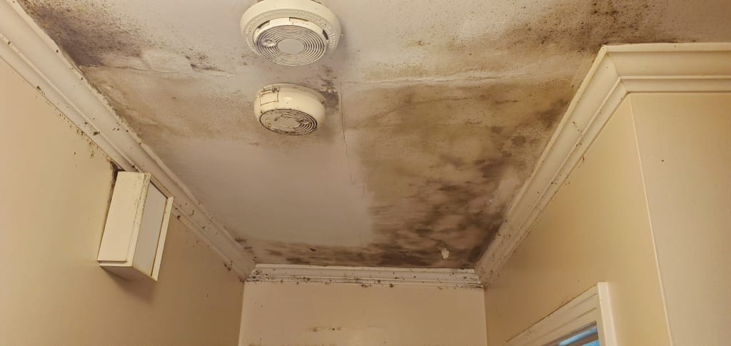 Mold growth on a hallway ceiling from a water leak