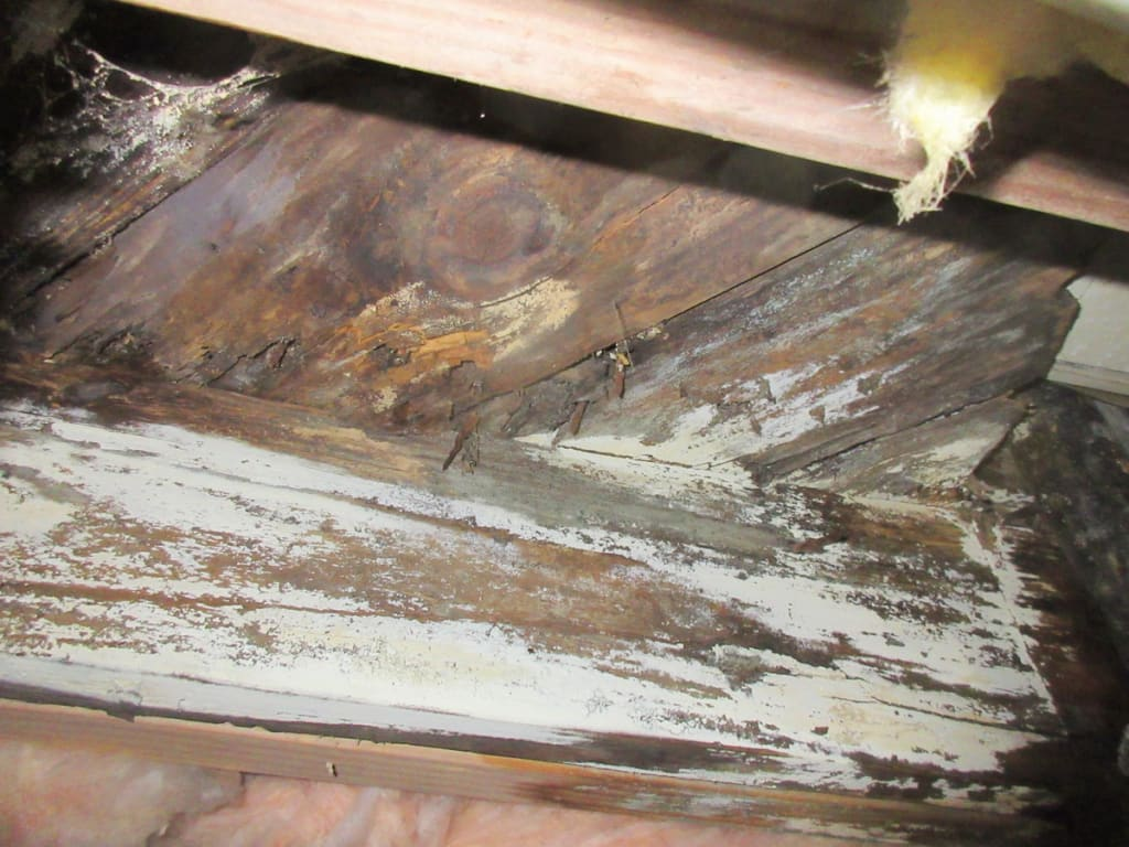 Water damage caused mold growth in crawlspace