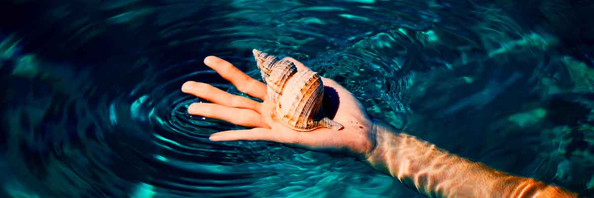 Hand Holding Sea Shell