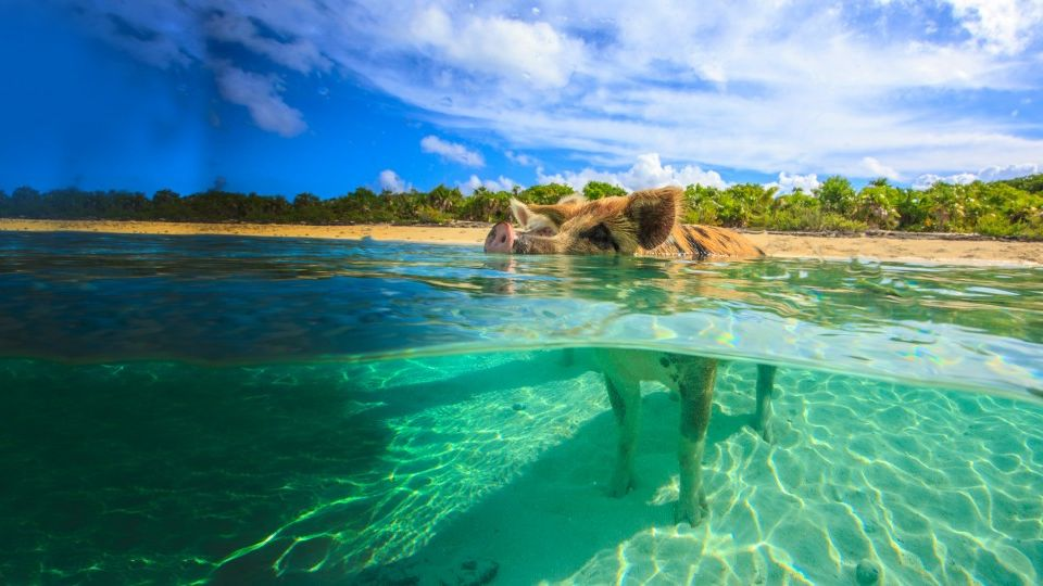 Caribbean & Bahamas yacht charter
