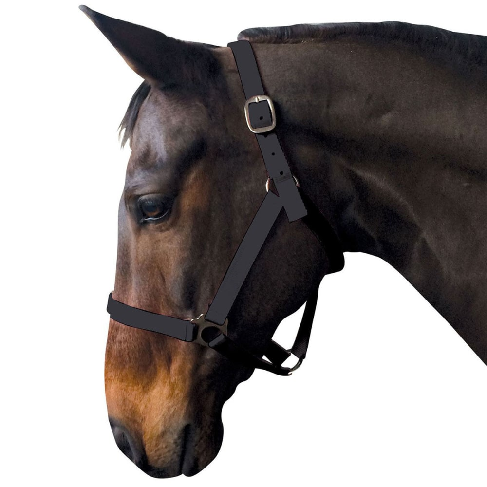 REQUISITE Economy Horse Head Collar - BLACK
