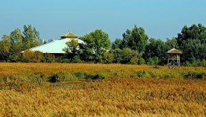 Sóstó Természetvédelmi Terület | BOCS Alapítvány