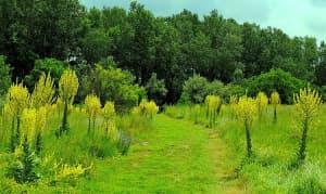 Sóstó Természetvédelmi Terület   BOCS Alapítvány