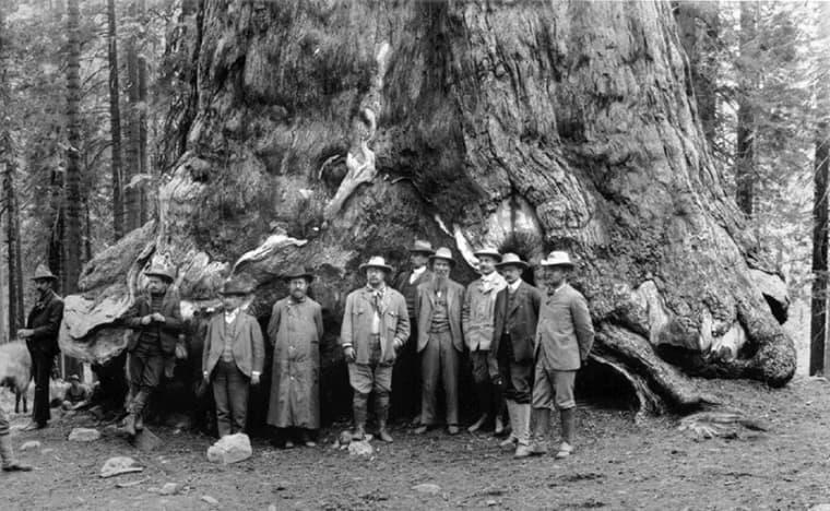 Hogyan halt el a hatvanas évek zöld ébredése? | BOCS Civilizációtervezés Alapítvány