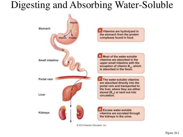 liver absorbing vitamins taken orally