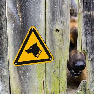 Warnung vor dem Hund am Holzzaun als Warnzeichen nach ISO 7010