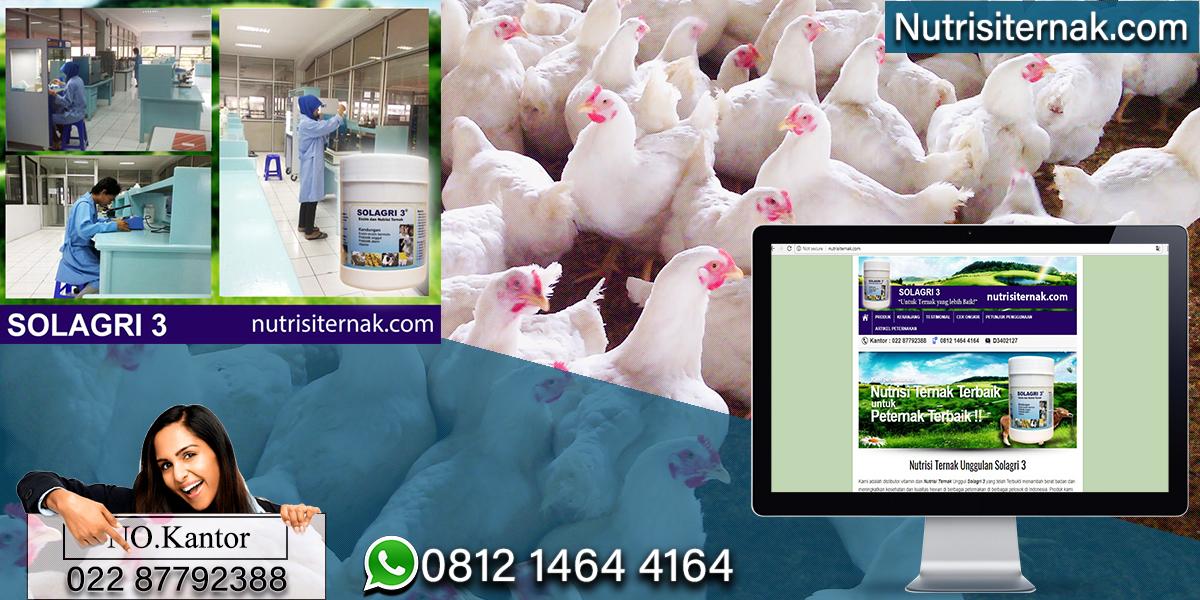 Peternakan Ayam Arab