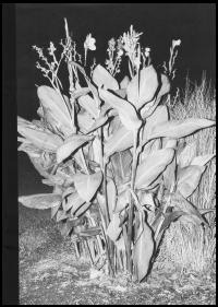 Flushing Meadows - © 1991 Books
