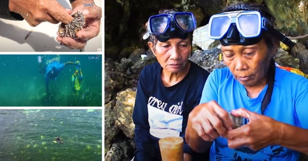 Two Senior Citizens risked their life to dive for sea urchins in the waters of Boracay to make a living