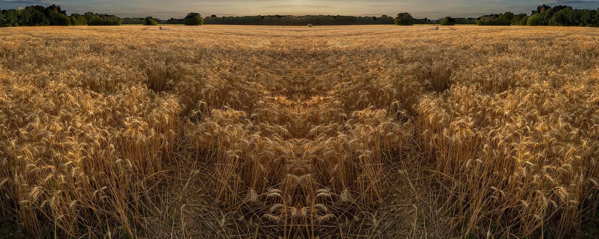 Vincentwashere Auvers Wheatfield
