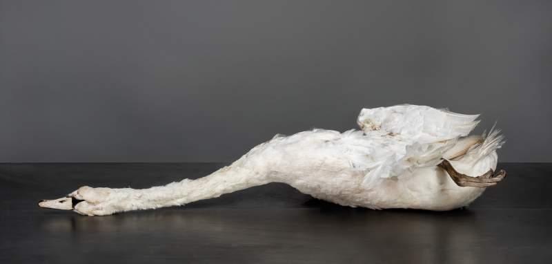ZWAAN Karin Borghouts 70x145cm 20160714221715