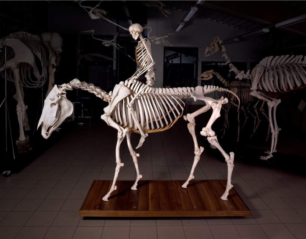 Karin Borghouts skeleton