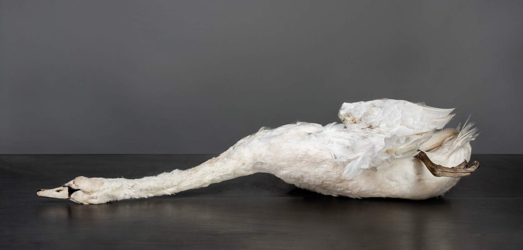 ZWAAN Karin Borghouts 70x145cm 20160411214735