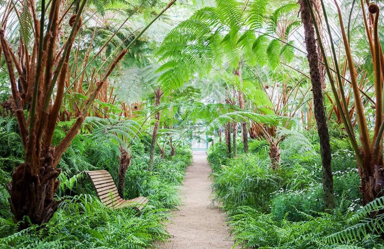 S Annex Palmen Borghouts