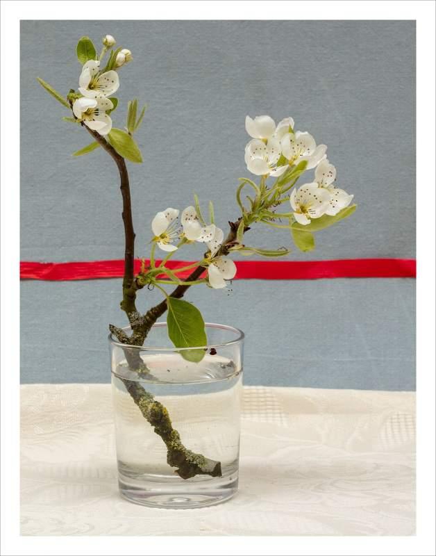10 Sprigof Blossom EDITION