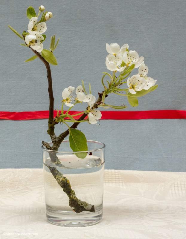 Vincentwashere Blossoming Branch
