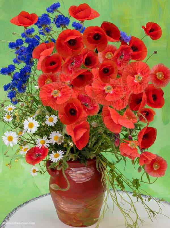 Vincentwashere flowers poppies