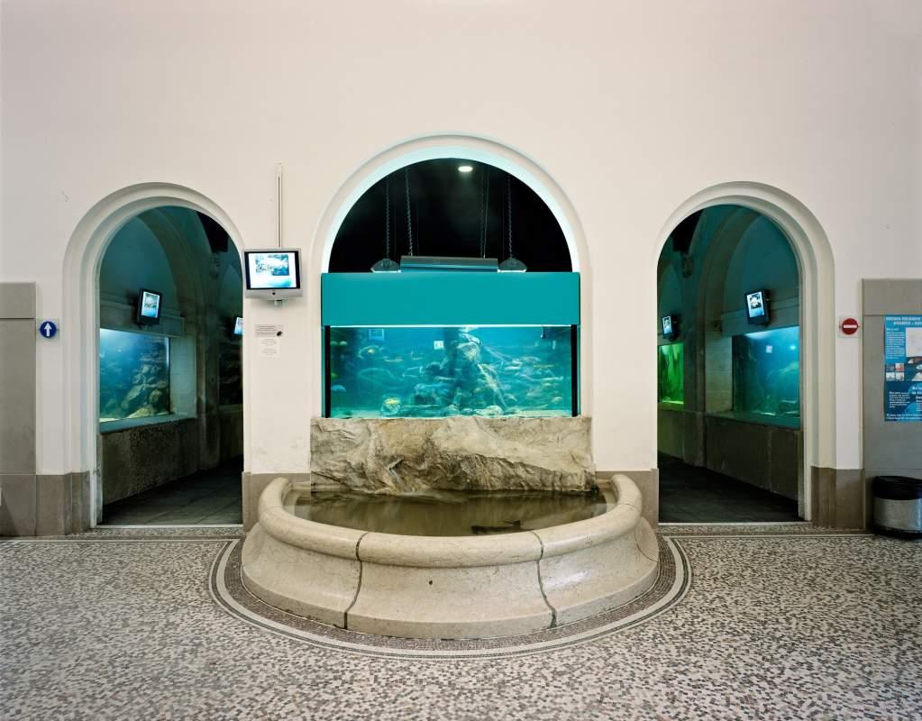 Inkomhal Aquarium