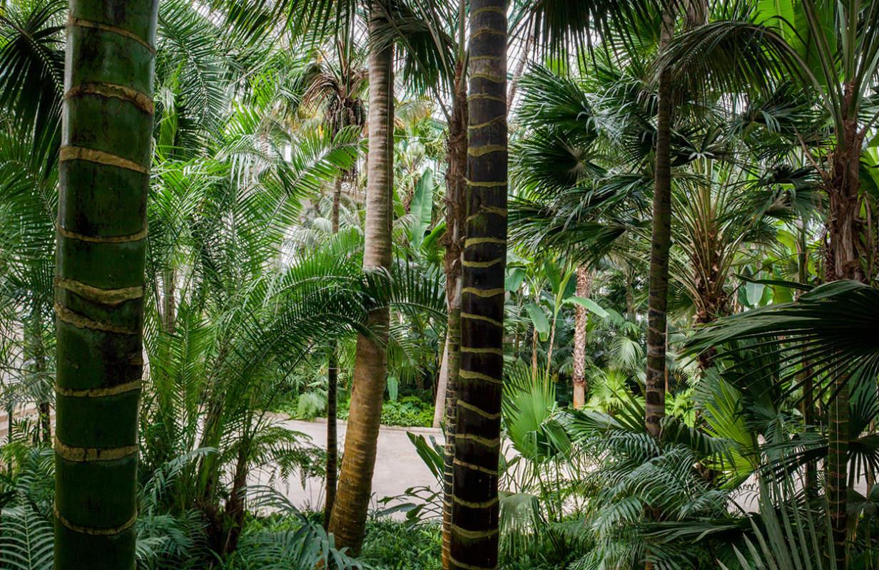 S Wintertuin Jungle Borghouts