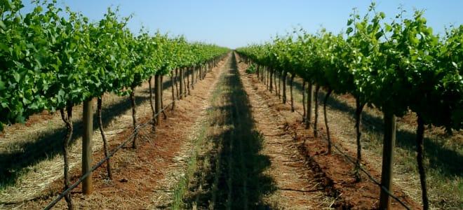 Cranswick Wines Australia Pty Ltd