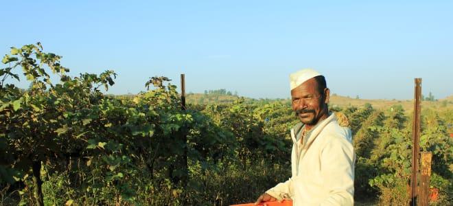 Wines in India