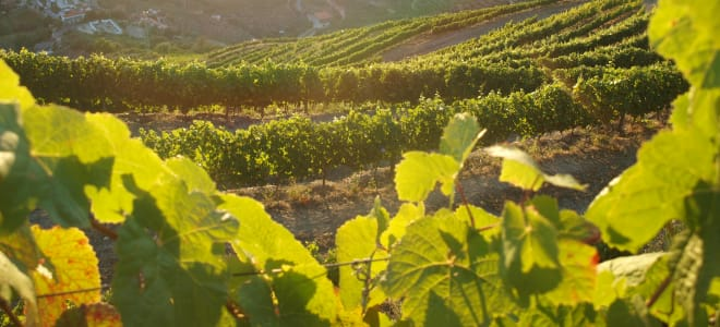WINES AND WINEMAKERS BY SAVEN