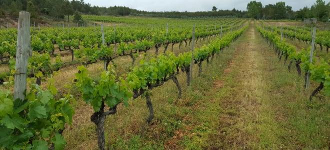 Textura Wines