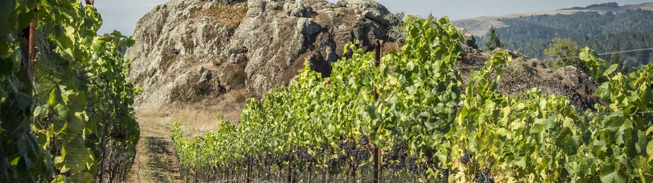 Cobb Wines