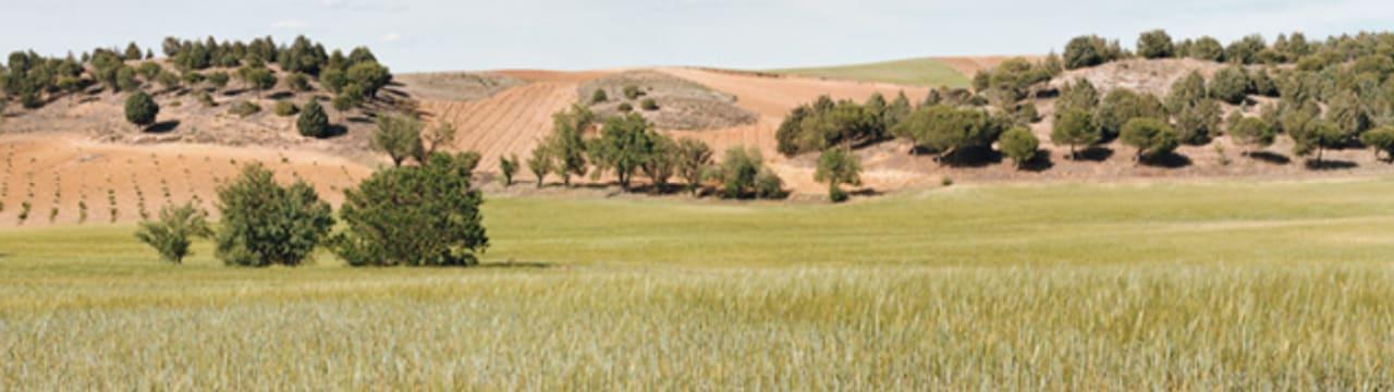 Compañia de Vinos Telmo Rodriguez, S.L.