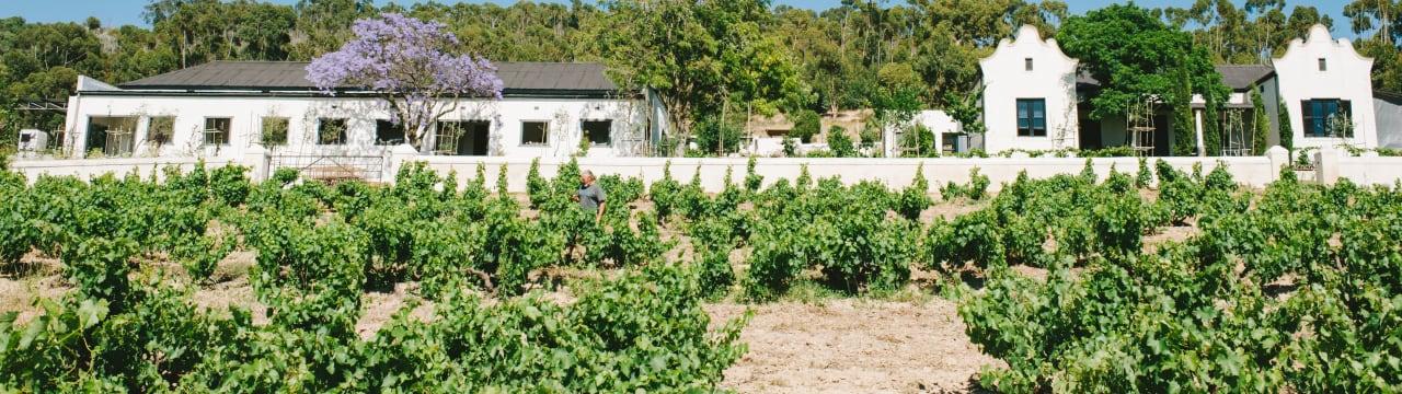 AA Badenhorst Family Wines
