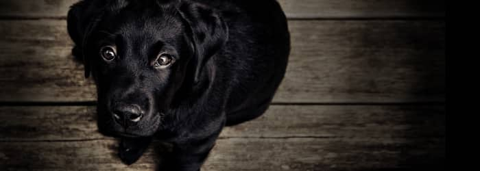 Dogs, depression and what you can do to help your pet