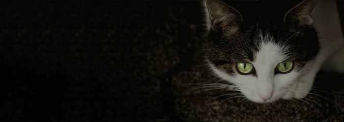 Review: Argos Pet Insurance