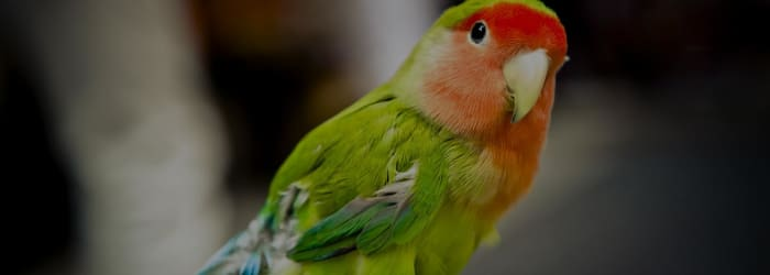Best Exotic Pet Insurance