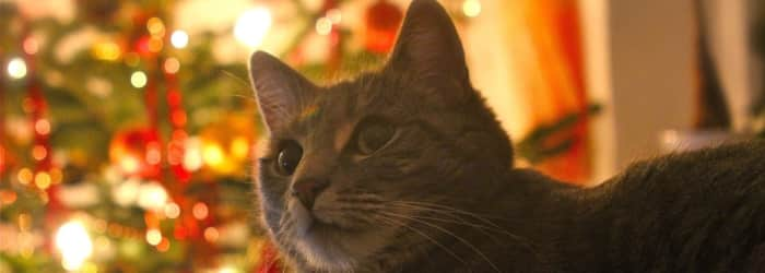 Best Christmas Gift Ideas for Cats 2018