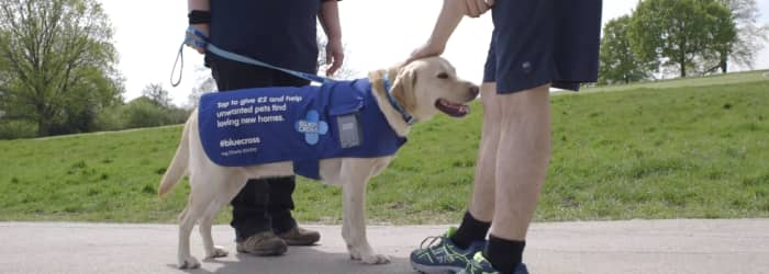 The first contactless dog and other unusual animal charity fundraising tales