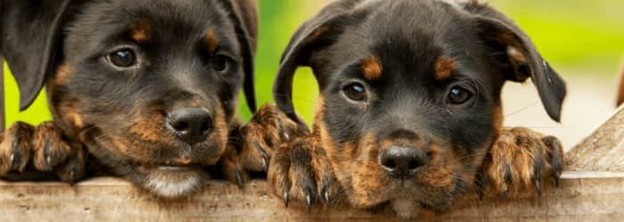 New law to protect puppies from cruel farm trade
