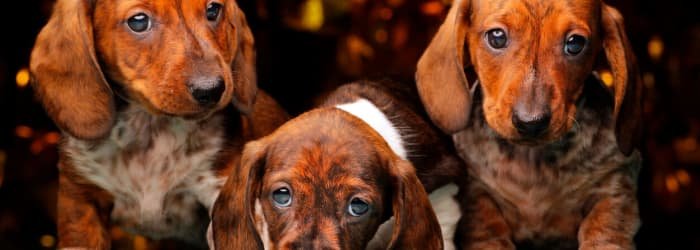 What pet owners need to know in 2020