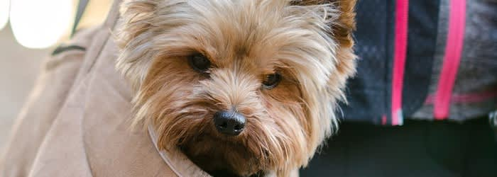 Dog theft - how to keep your dog safe and the breeds most stolen